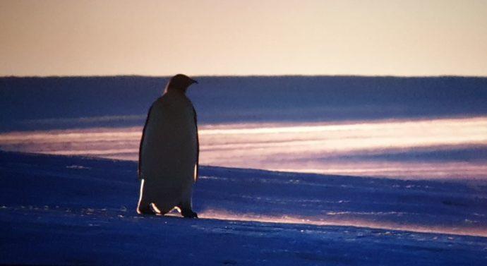 Przygoda na Antarktydzie